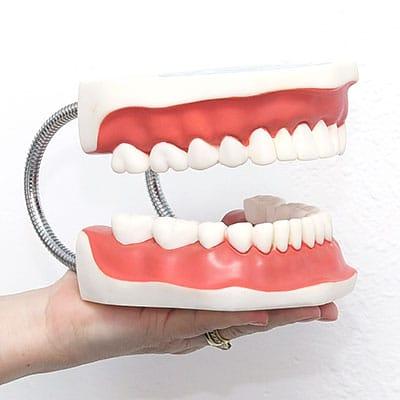 רופא שיניים -אשקלון